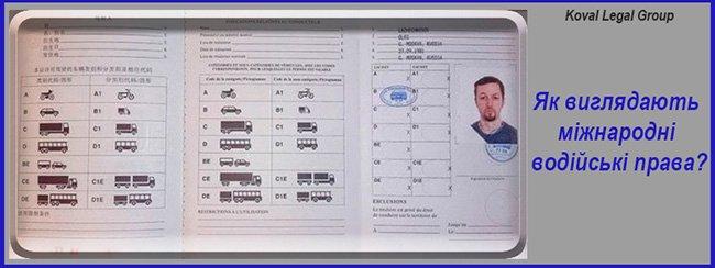 міжнародне посвідчення водія фото
